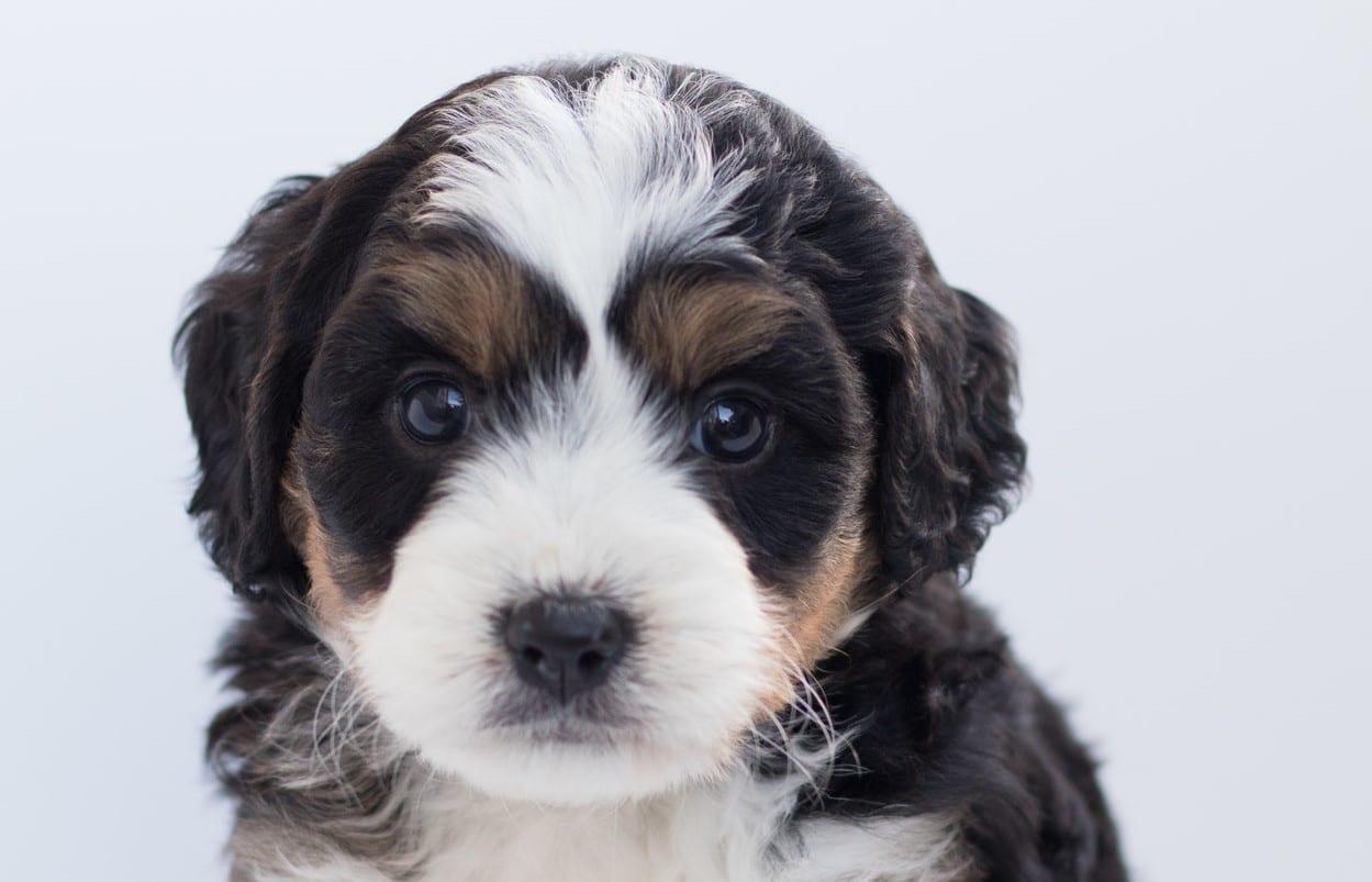 millionaire dog wills