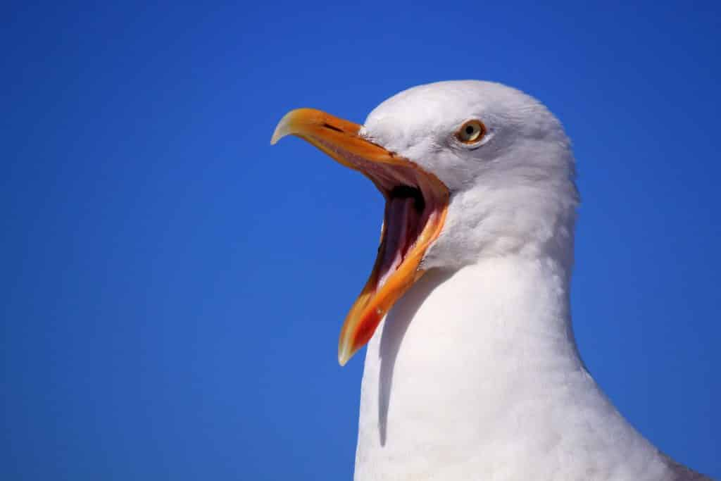seagull that attacked woman strange civil court case